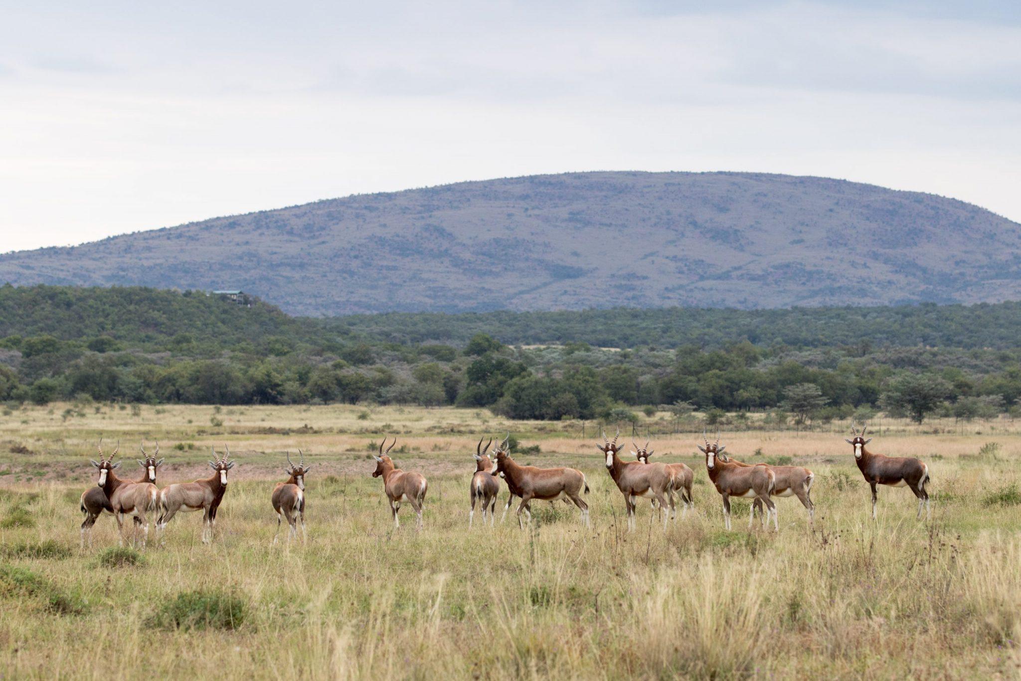 York Safaris