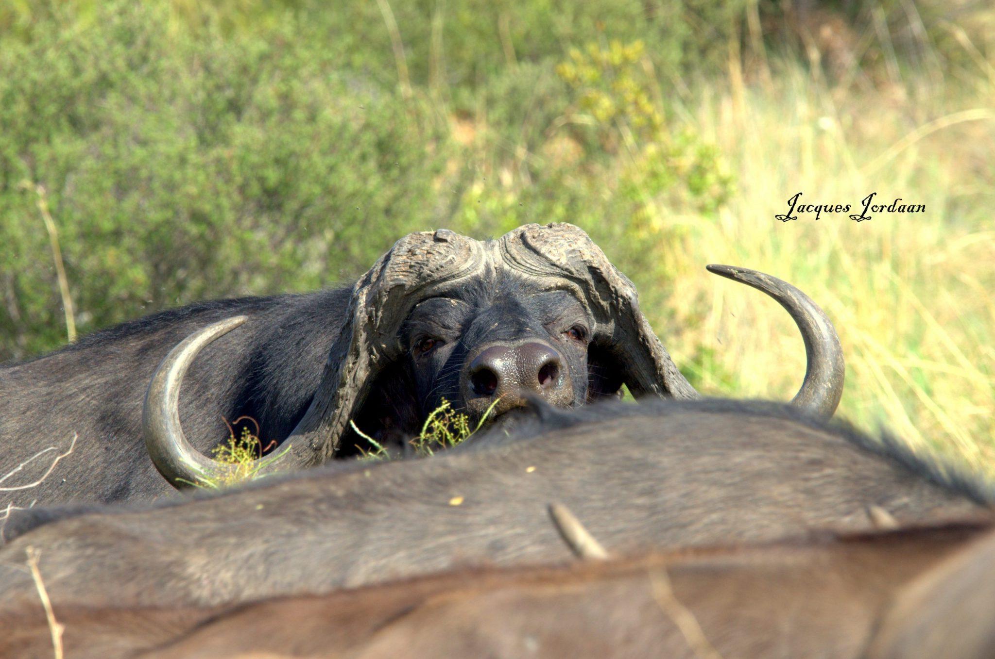 Ndloti Safaris