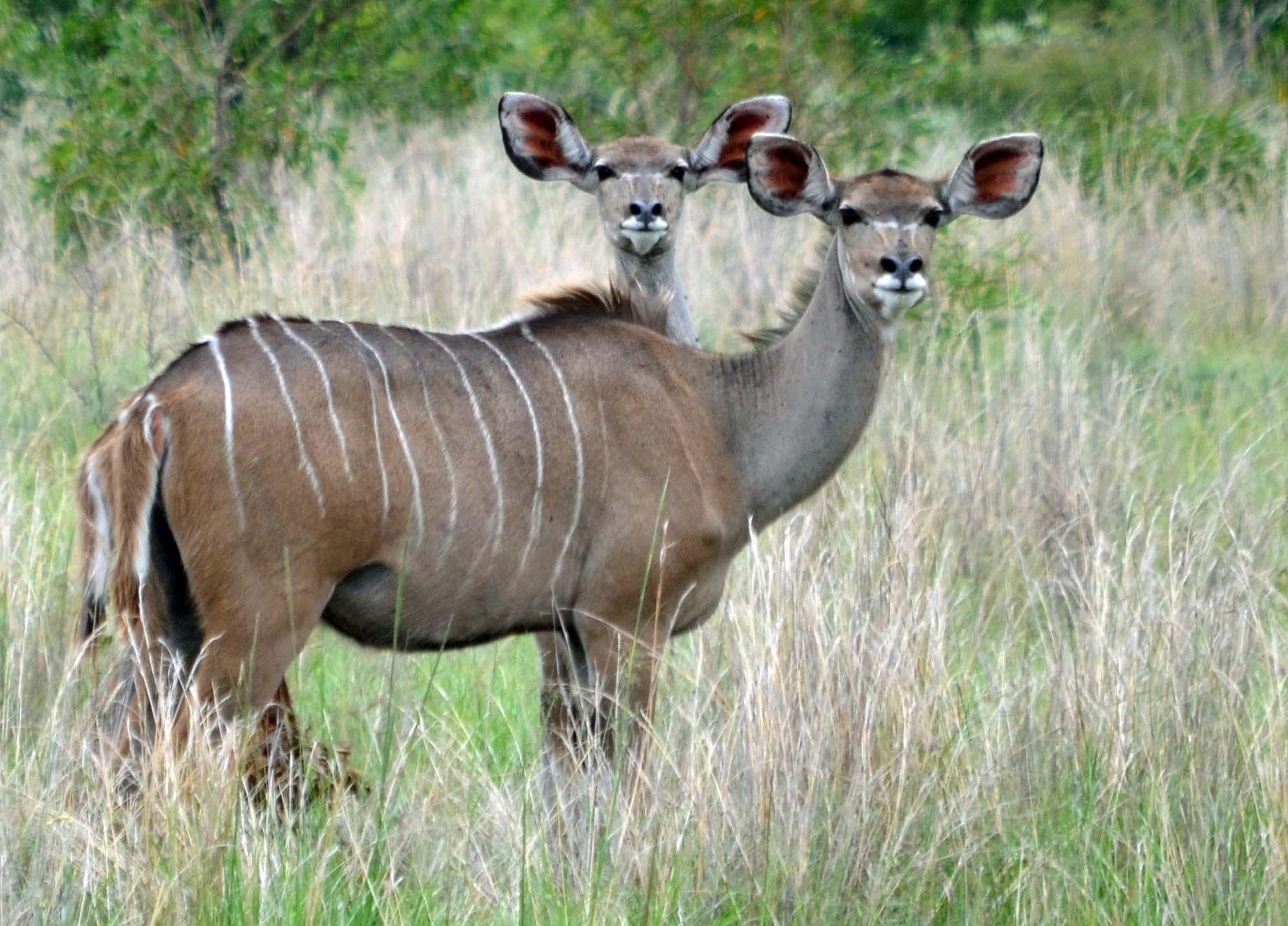 Dabchick Wildlife Reserve