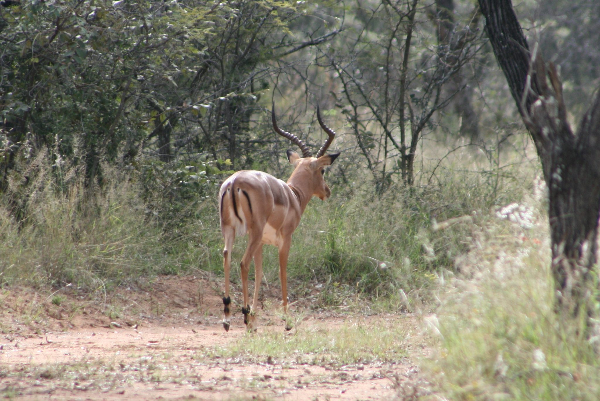 Naboom Nature Reserve