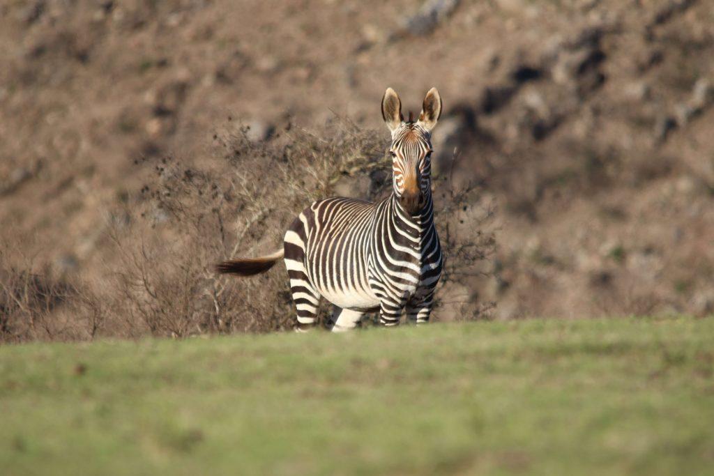 Bushmans Wildlife Reserve